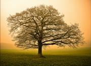 Самое крепкое дерево?