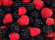 Что является лесной ягодой?