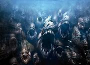 Пиранья — самая опасная рыба Амазонки