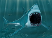 Самое зубастое животное — акула