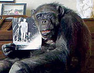 шимпанзе Чита