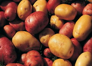 Первооткрыватели картошки в Европе