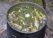 Уха — рыбный суп