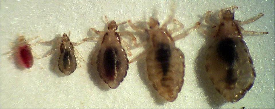 разновидности паразитов живущих в организме человека