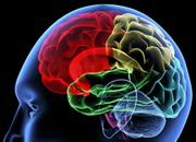 Левое полушарие мозга важнее, чем правое