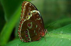 Интересные факты про Бабочку (Butterfly)