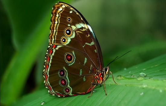Бабочка (Butterfly)