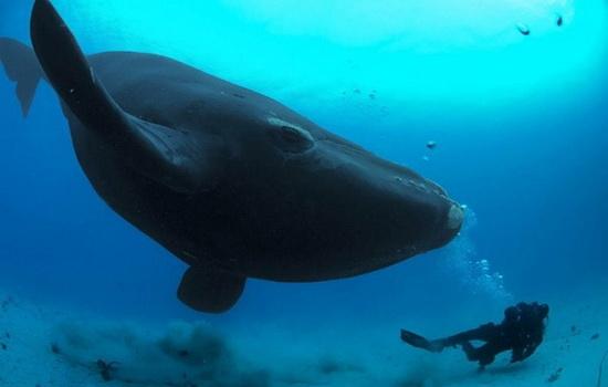 Чем в XIX веке китобои убивали китов