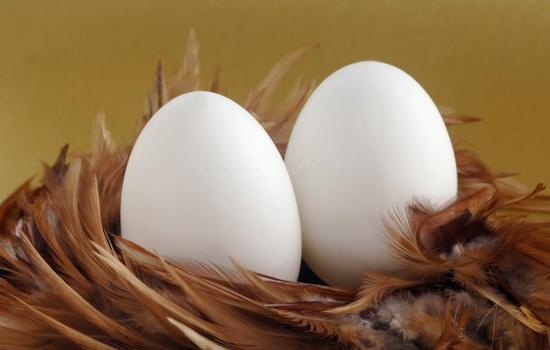 Что было раньше — курица или яйцо