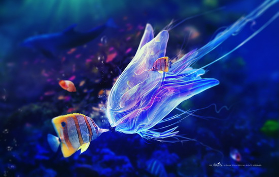 Что делать, если вас ужалит медуза