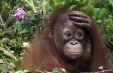 Что такое «медная обезьяна» ?