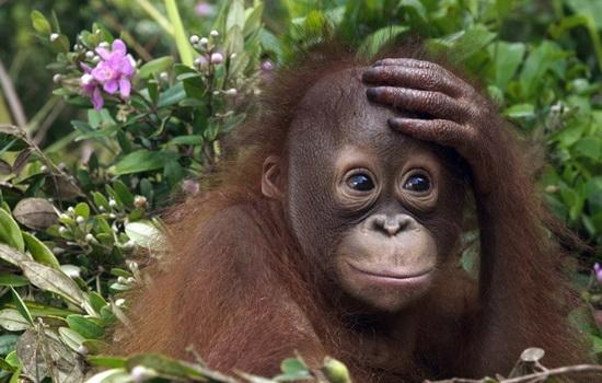 Что такое «медная обезьяна»