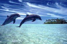 Дельфины живут в морях
