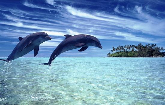 delfiny-zhivut-v-moryax