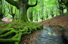 Деревья добывают воду при помощи корней