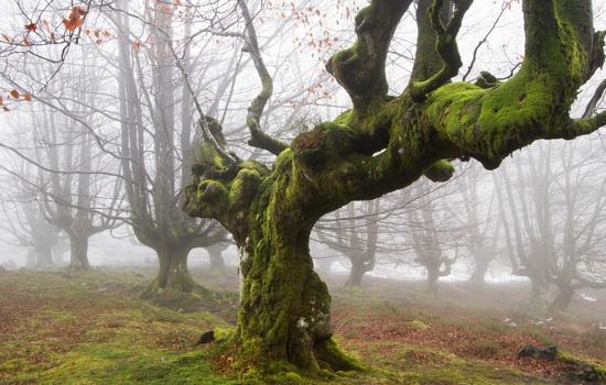 Как в лесу определить север