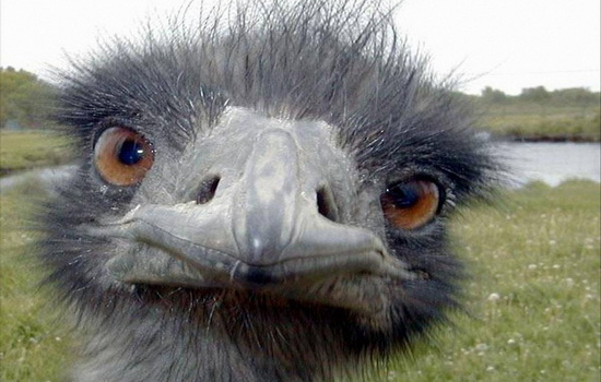 kakaya-ptica-neset-samye-malenkie-yajca