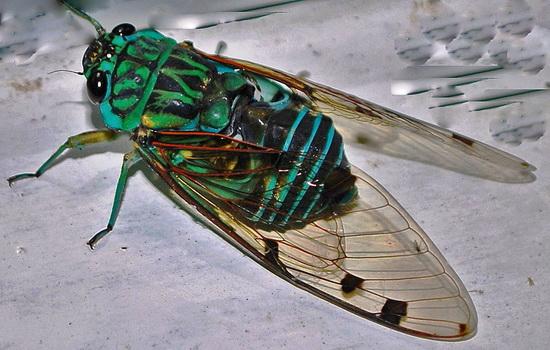 Какое насекомое живет дольше всех
