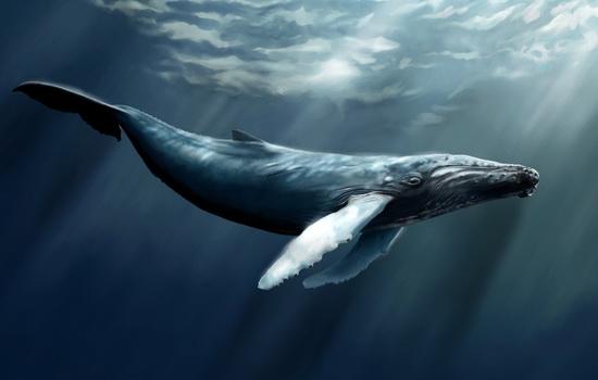kit-whale