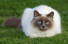 Кошки безболезненно падают с высоты