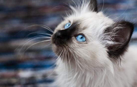 Кошки и высота