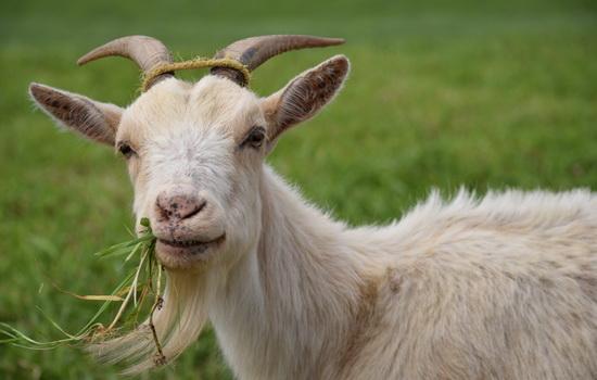 Омская область выделит 96,6 млн рублей на альтернативные виды животноводства