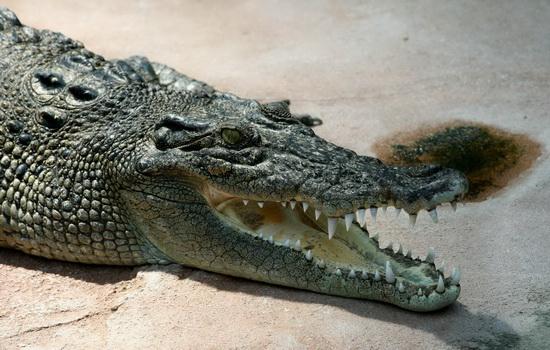 krokodilovy-slezy