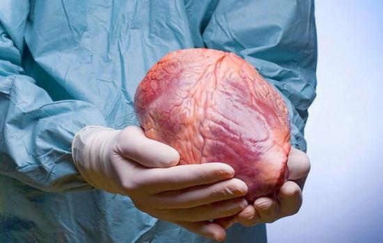 Может ли живой человек быть успешным донором сердца