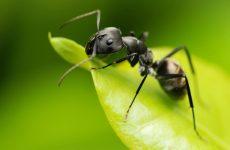 Интересные факты о Муравьях (Ant)