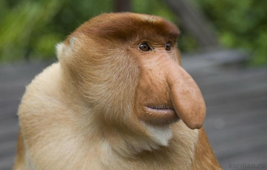obezyana-monkey