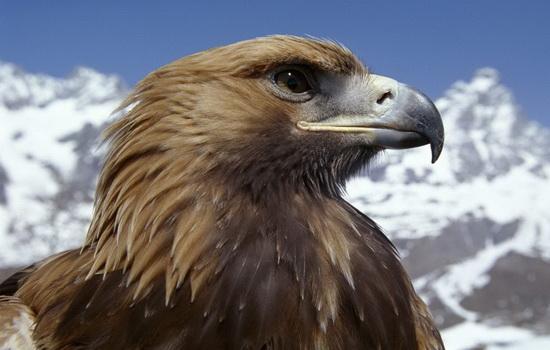 orel-eagle