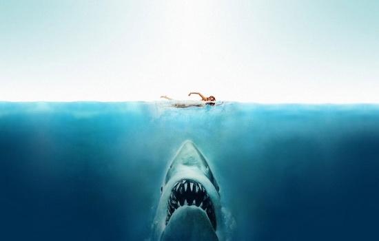 Откуда акула знает, что вы в воде