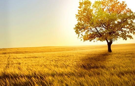 Почему солнечный свет полезен для здоровья