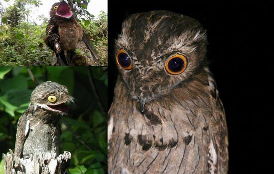 pticy-ne-vpadayut-v-spyachku