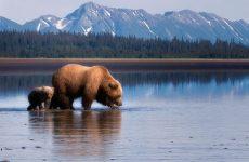 Российские кожаные деньги на Аляске