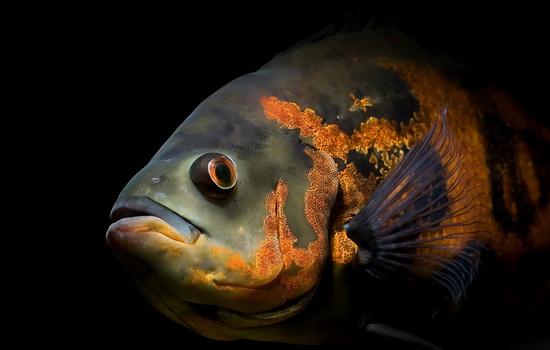 ryby-gluxi-i-nemy