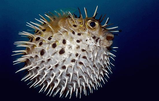 ryby-ne-mogut-vyzhit-bez-vody