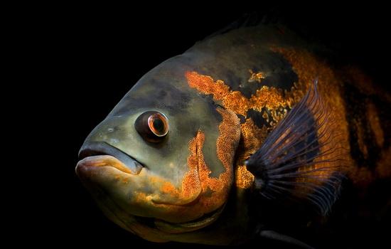 ryby-nemye