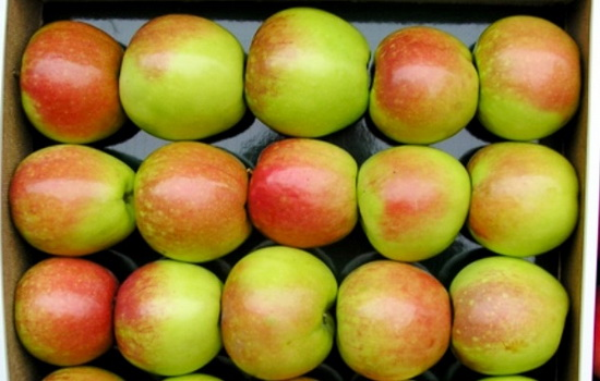 Сколько сортов яблок существует