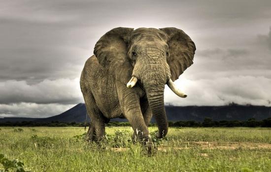 slon-pet-vodu-xobotom