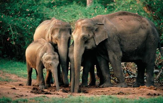 slony-boyatsya-myshej