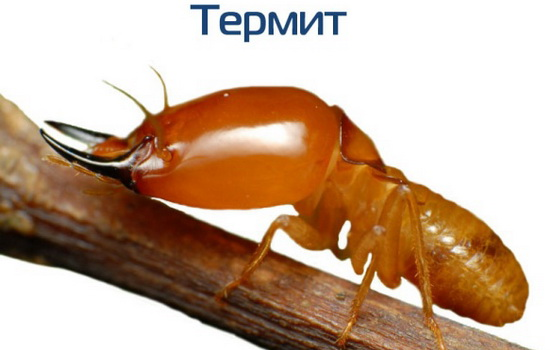 Термит (Termite)