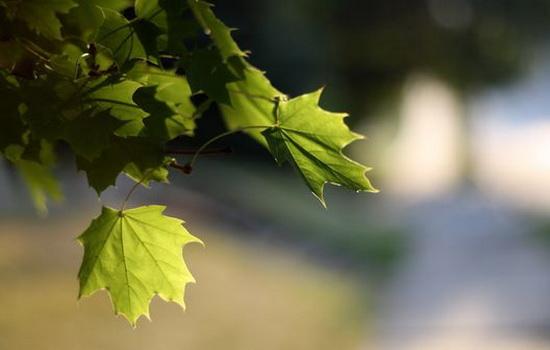 u-derevev-tolko-zelenye-listya