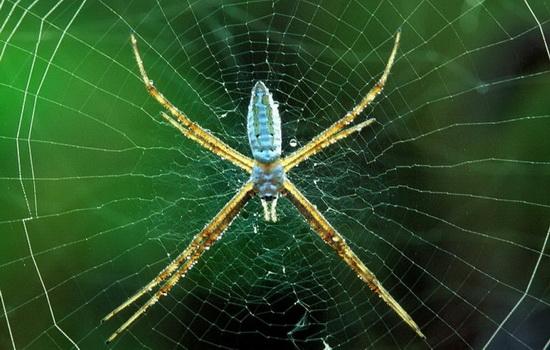 ukusy-paukov-opasny