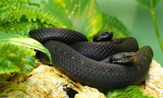 Все ли змеи появляются из яиц