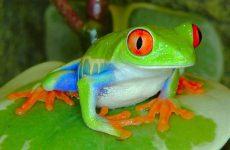 Интересные факты про Жабу (Toad)