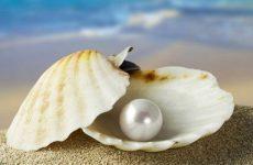 Интересные факты про Жемчужницу (Pearl Oyster)