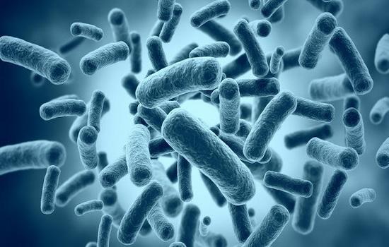 За что все ополчились на бактерий