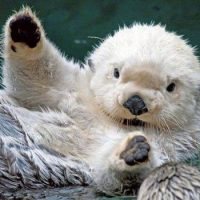 Интересные факты про Бобра (Beaver)