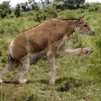 Бывают ли травоядные с когтями?